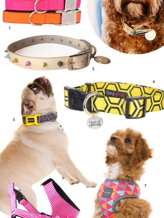 The BEST Australian dog collars and harnesses for every shape and size of dog. Includes personalised collars, leather, fabric, and more - plus where to buy.