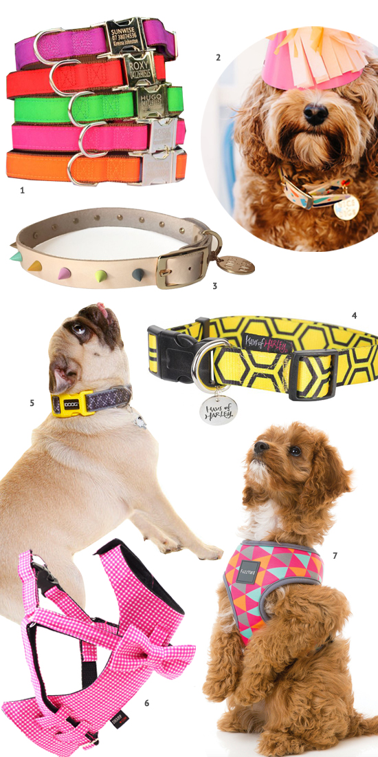 Best Harnesses For Fluffy Dogs
