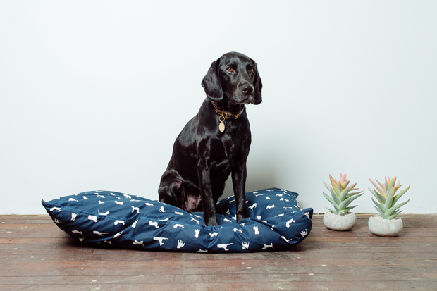 he best Australian Made Dog Beds for dogs of all shapes and sizes. Includes indoor and outdoor luxury dog beds, photo gallery and where to buy.