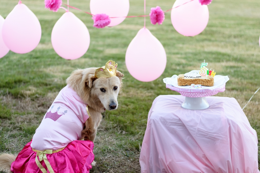 A beautiful way to celebrate your rescue dog's adoption day with their very own birthday party! Full photo pictorial by Mandy Liz Photography.