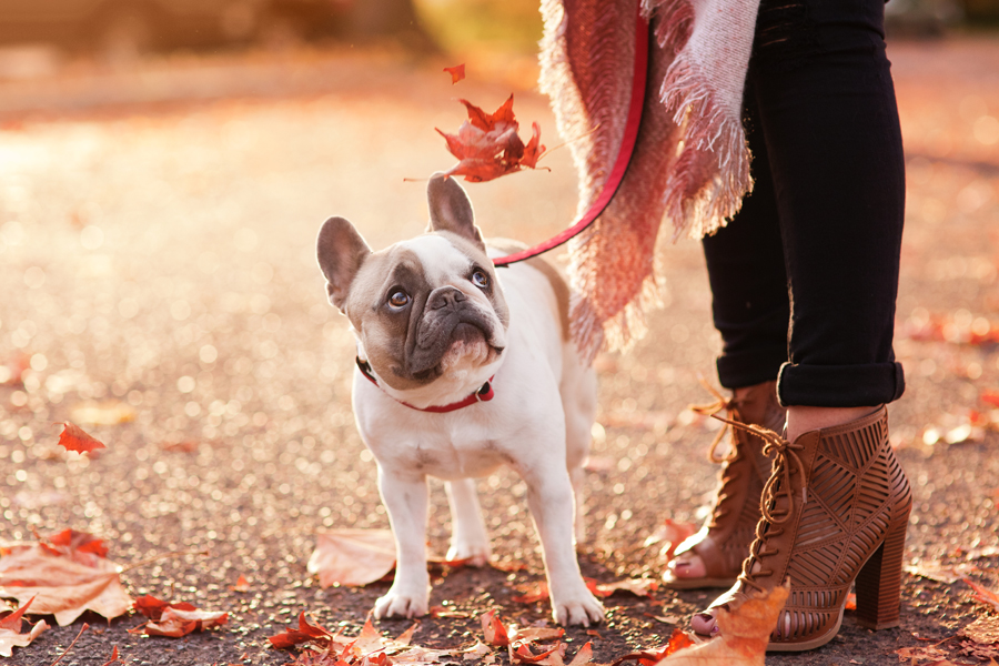 Dogs AND shoes are a girl's best friend! A four part pet photography series by Missy Moo Studio - see the full pictorial here.