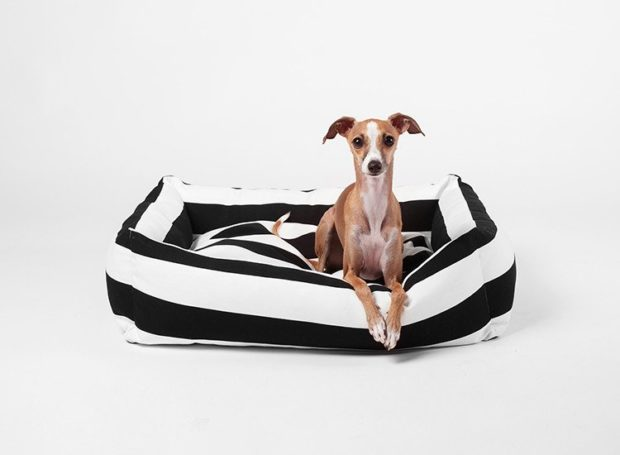 The best Australian Made Dog Beds for dogs of all shapes and sizes. Includes indoor and outdoor luxury dog beds, photo gallery and where to buy.