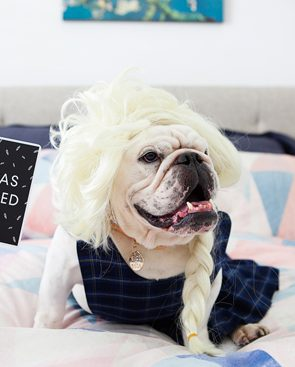 Capture all of your pet's fun and memorable moments with the hilariously, stylish pet milestone cards for fur babies by Seriously Milestones.