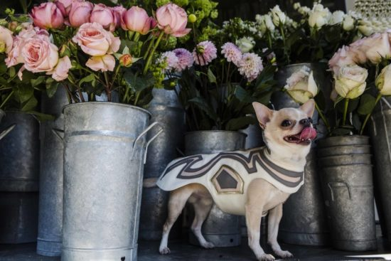 Hemingway's London offers up a debut canine collection of bespoke dog coats, combining sophisticated tailoring with sumptuous leathers & natural fibres.