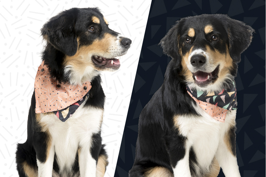 The BEST dog bandanas for every shape and size of dog. Includes reversible dog bandanas, vintage bandanas, collar bandanas and more - plus where to buy.