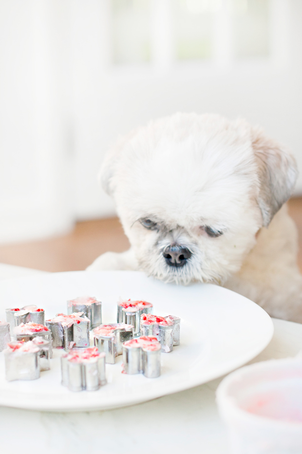 Frozen strawberry and coconut oil dog treats - just 2 ingredients! Your dog will love these yummy treats and the recipe is SO EASY you'll love making them.