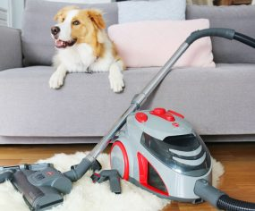 Full review of the $99 Hoover Dog and Cat Vacuum (turbo bagless 1800W) form Godfreys - the best budget friendly vacuum for pet owners and allergy sufferers.