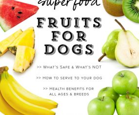 A full list of superfood fruits for dogs, including their long term health benefits and healing properties for illness and allergies - and how to serve.