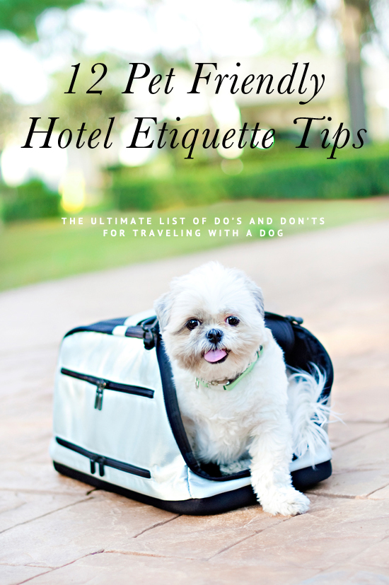 12 expert tips for traveling with a dog - the ultimate list of do's and don'ts when on vacation with your pet including pet friendly hotel etiquette tips.