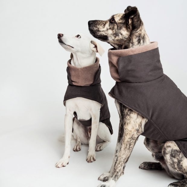 The only dog coat guide you need - the BEST dog coats for winter, fall & spring. Includes luxe AND budget friendly options for dogs of all shapes and sizes.