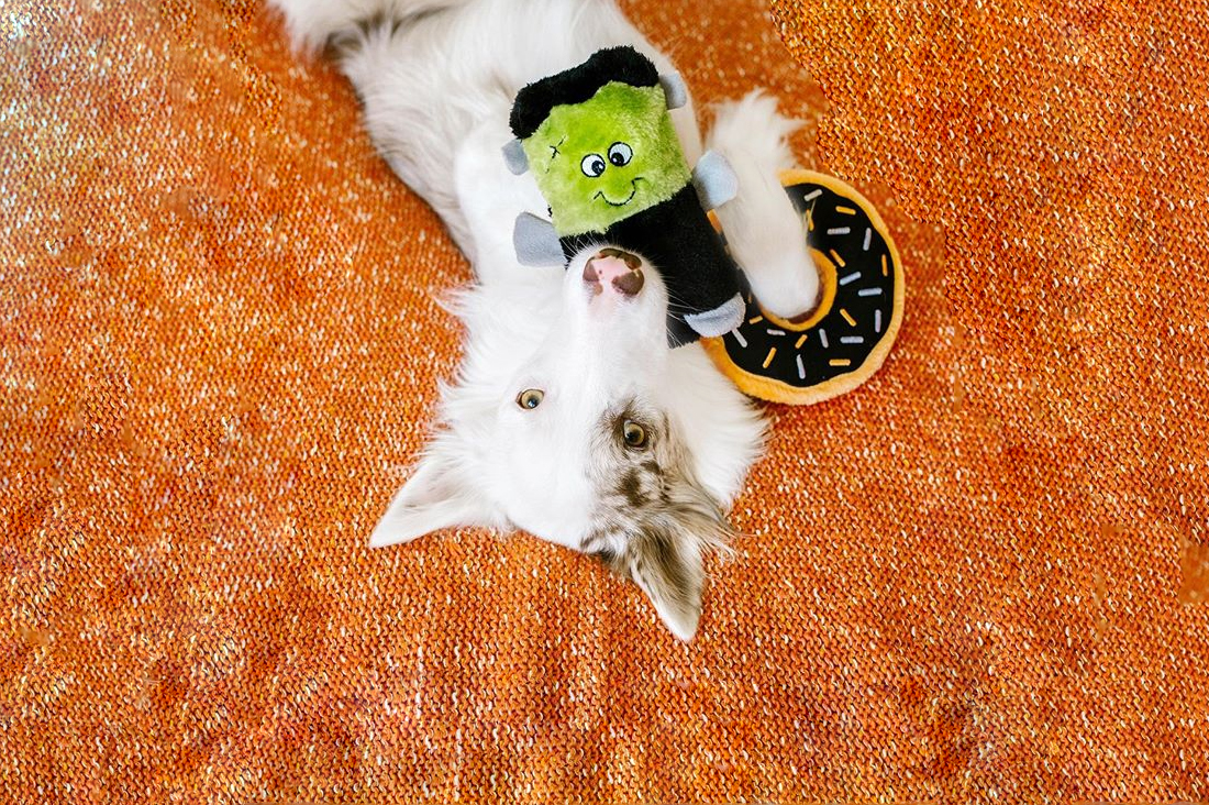 Our top picks of Halloween dog toys, collars, and accessories this season. Get your pup into a SPOOKtacular spirit with these halloween themed pet goodies.