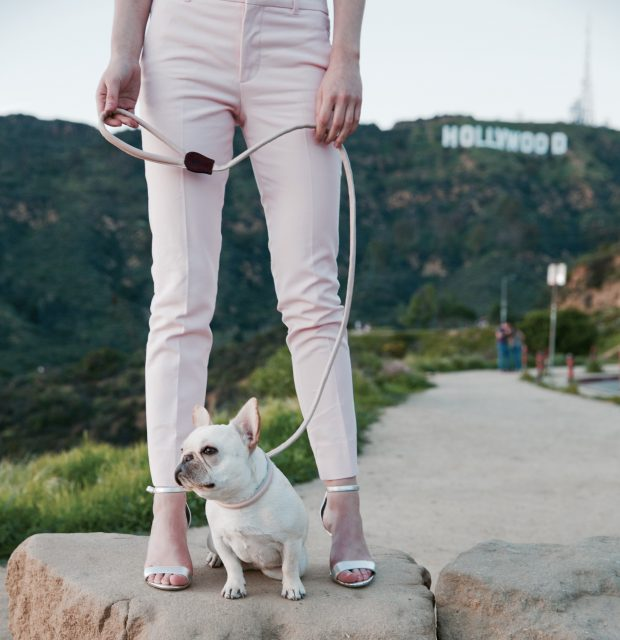 Dog Friendly Los Angeles City Guide: Where to stay, play, and dine when you're visiting LA with your dog. Image by Teddy Maximus.