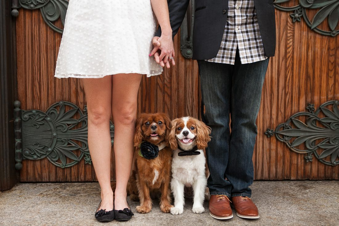 No one could possibly say no to a puppy! The best ideas on how to include your pet in your proposal and make beautiful memories in the process.