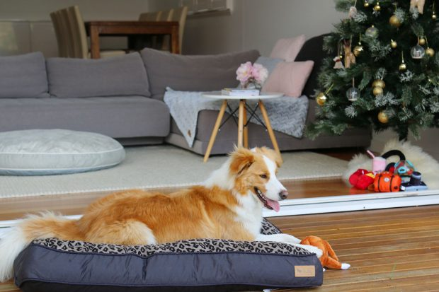 It's time to Treat Yo' Self and Treat Yo' Dog with these stylish and fun P.L.A.Y. pet lifestyle accessories that blend perfectly into any modern home.