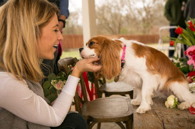 Expert tips on how to plan, host and enjoy your own dog lovers meetup - meet other dog loving friends, and get your pup their own social scene.