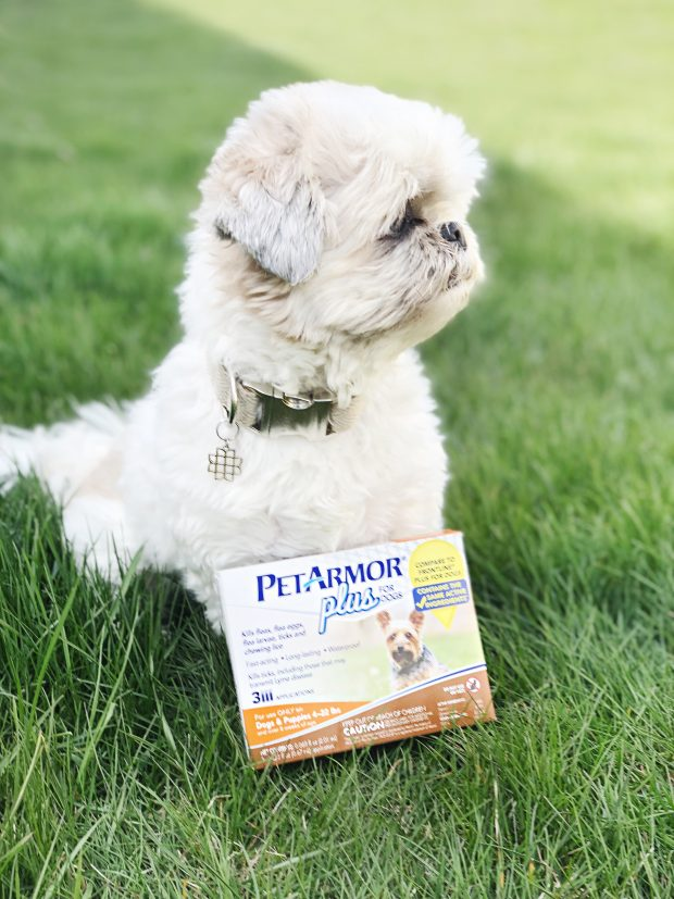 Our easy guide on how you can prevent AND treat fleas once and for all - in one budget friendly step. Read more to keep your dog flea free.