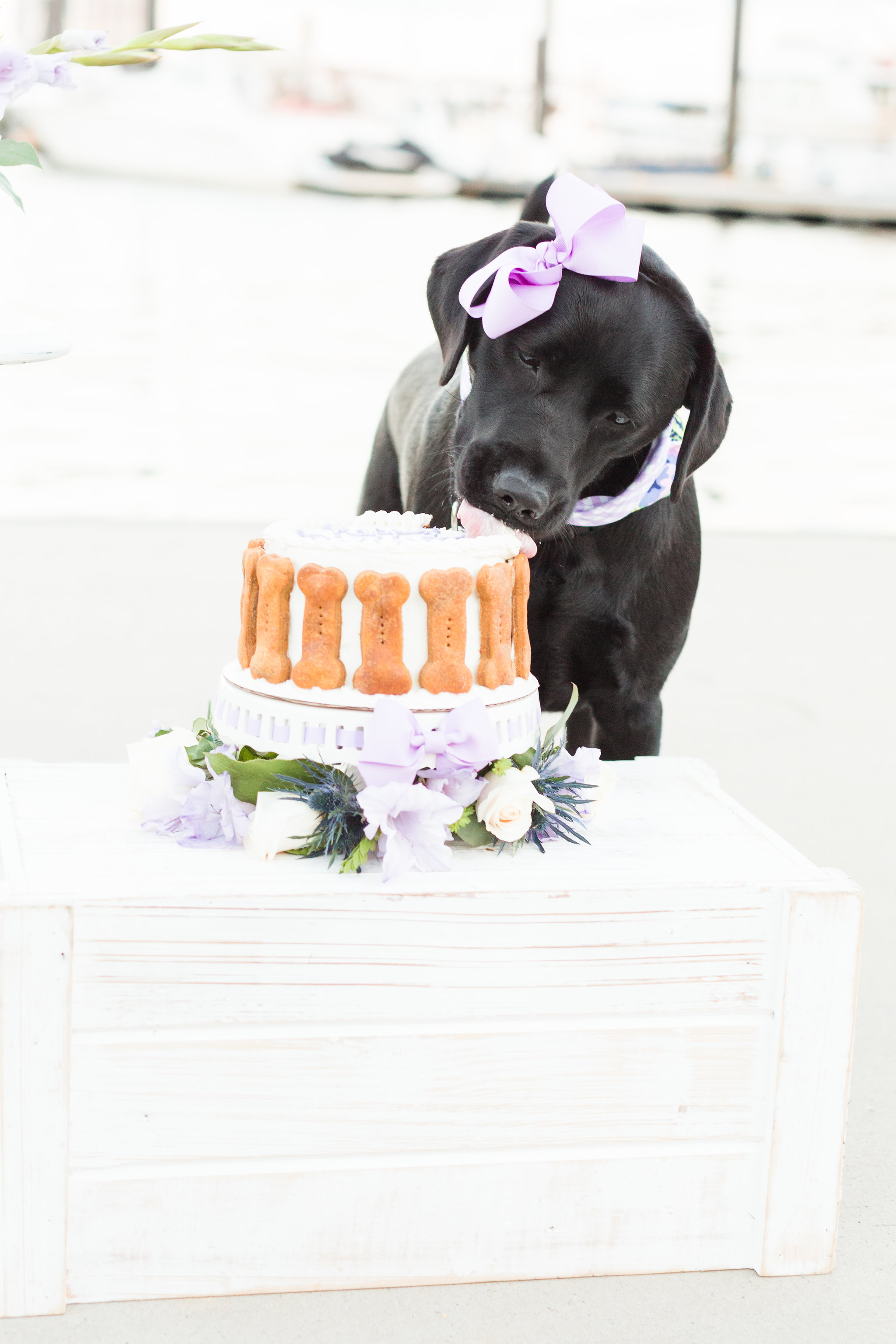 Expert tips on how to do a dog cake smash and how to capture the perfect dog birthday photos - fuss free and budget friendly.
