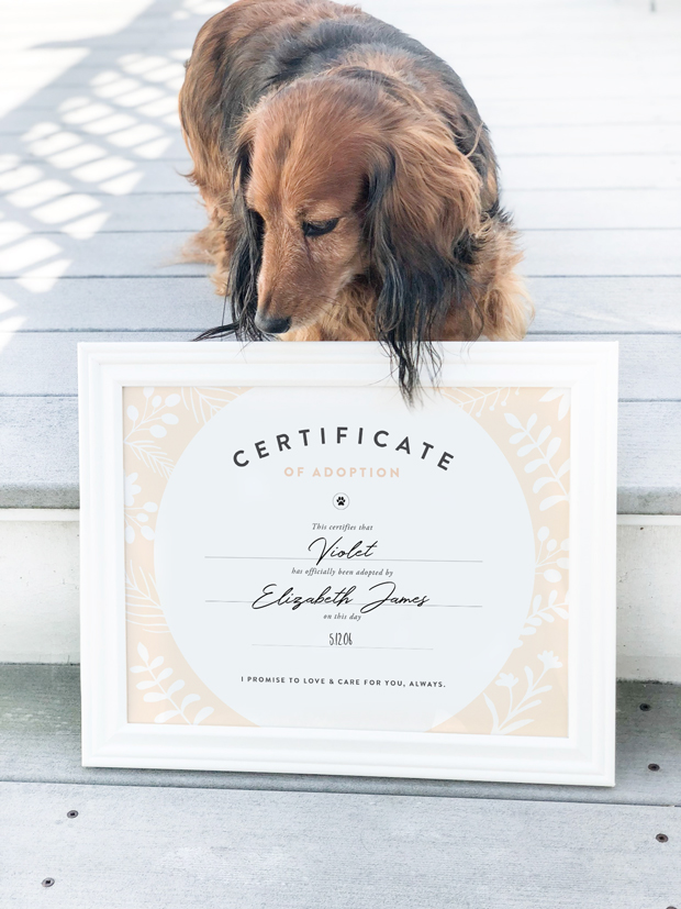 Whether you've just adopted a dog or you've had them for years, this FREE dog adoption certificate printable is for you! Simply download, print and frame.