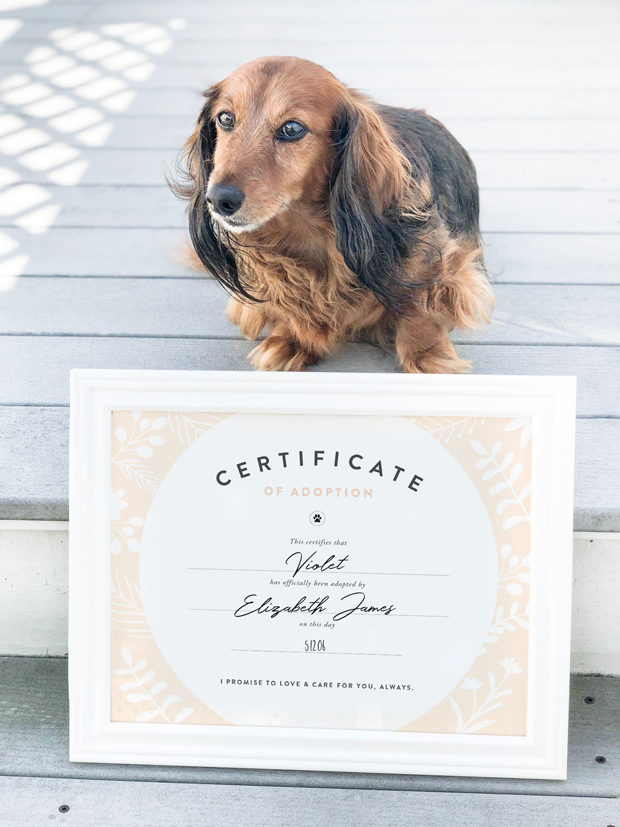 photo relating to Pet Adoption Certificate Free Printable titled Extremely Fluffy