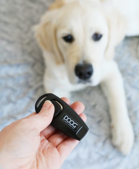 Beginner tips for clicker training for dogs. What you need, basic commands, and the DOs and DON'Ts of clicker training. For dogs all ages, sizes and breeds.