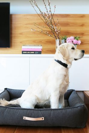 What if I was to tell you, you CAN have a magazine worthy, beautifully styled home with pets? And best of all, it's easy to create with minimal effort. Featuring For the Furry pet accessories.