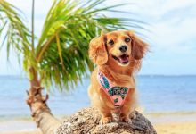 Our favourite tropical dog accessories right now - tropical dog apparel, tropical dog beds, tropical dog harnesses, leads & more that your dog will love.