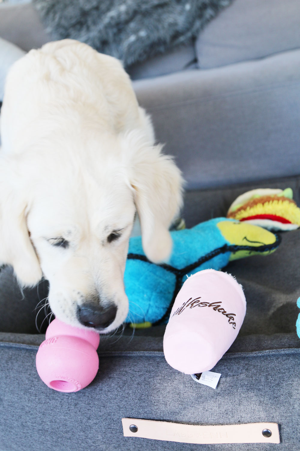 Expert tips on how to choose safe, durable, quality dog toys your dog will love - and how to spot an imitation. For treat balls, rope, plush and more.