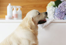 Your Ultimate Guide for Cleaning with Pets