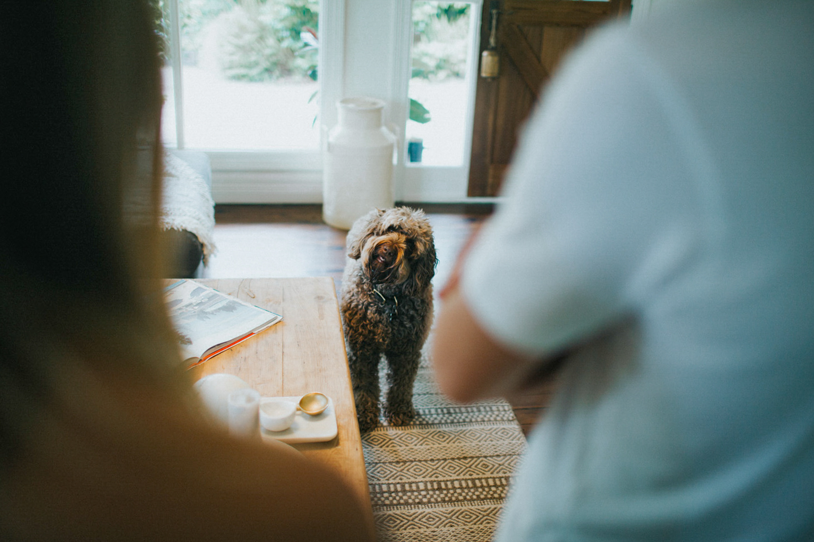5 Reasons to Do an In-Home Pet Photo Shoot