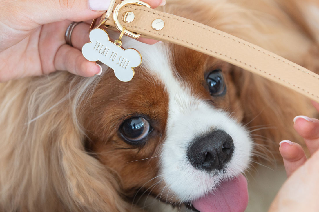 20 Cute & Colorful Pet ID Tags and Dog Collar Charms