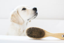 How to Treat Skin Allergies in Dogs Naturally