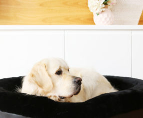 Decadent. Stylish. Luxurious. These aren't the big, ugly dog beds you're used to. Say hello to Frank & Arlo.