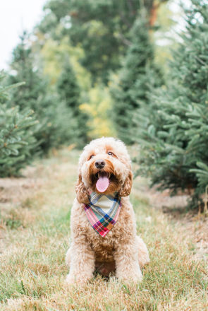 The ultimate 2020 holiday gift guide for dogs - the best stocking stuffers, dog treats, toys and accessories to pamper your pet this holiday season.