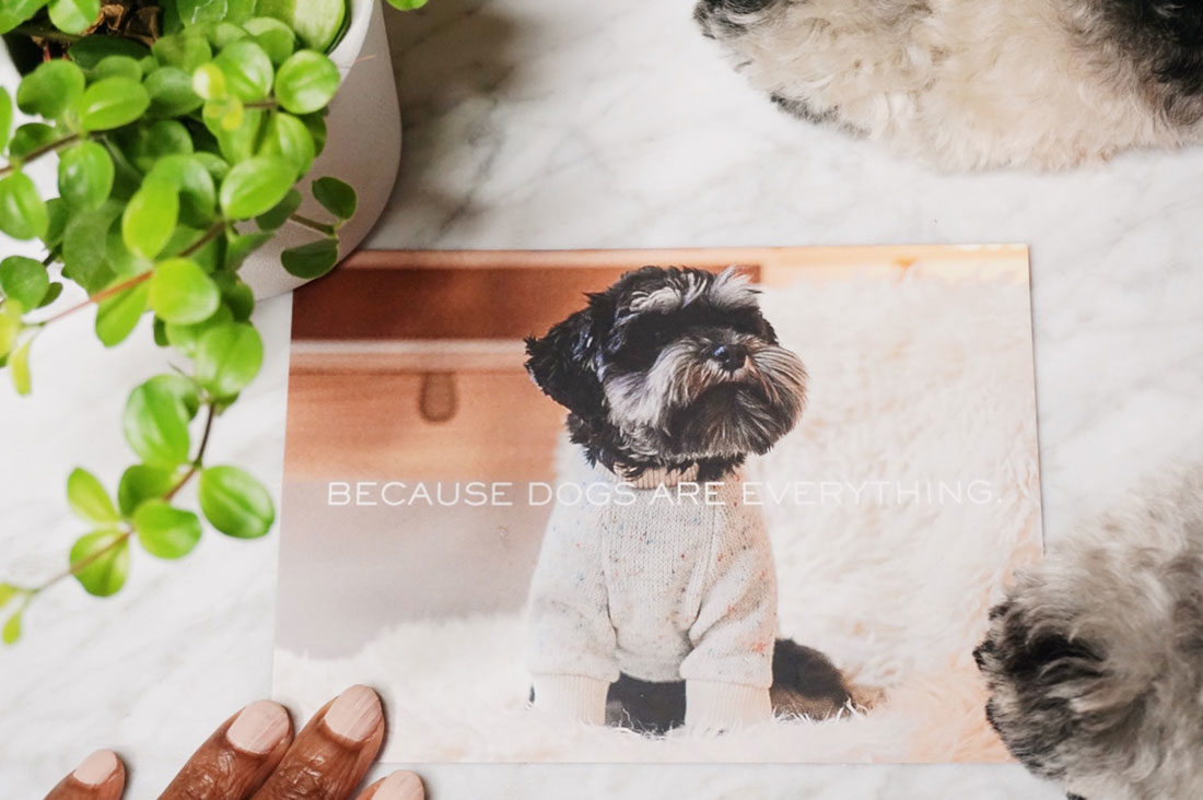 A look behind the scenes with Chicago pet brand, Sir Dogwood - the inclusive community for swank pups and their sartorially-minded owners.