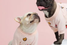Gnocchi & Goma_My Confection Sweater_Valentine's Day Gift Guide for Dogs