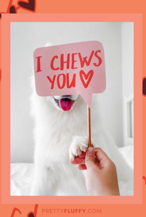 @chubbawubba_Reader Photos of Valentine's Day Photo Booth Props