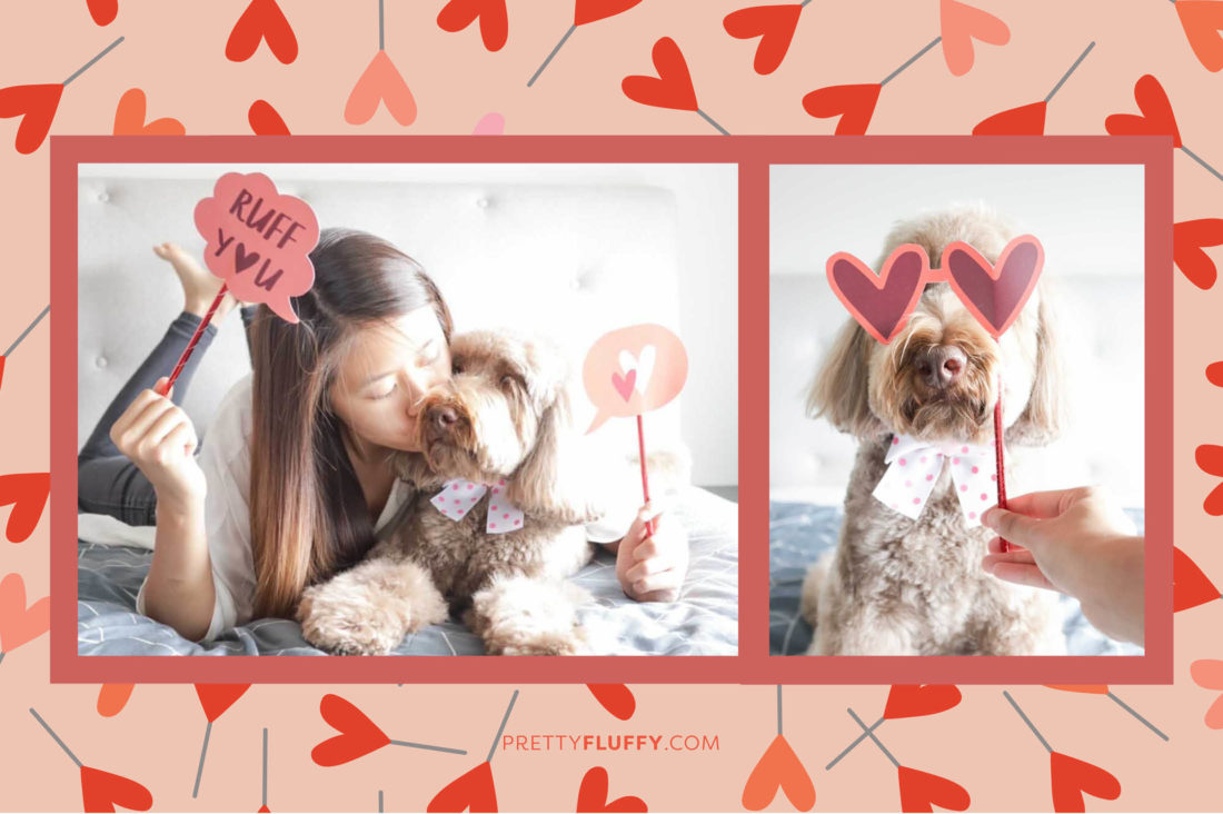 @bailey.thelabradoodle Reader Photos of Valentine's Day Photo Booth Props