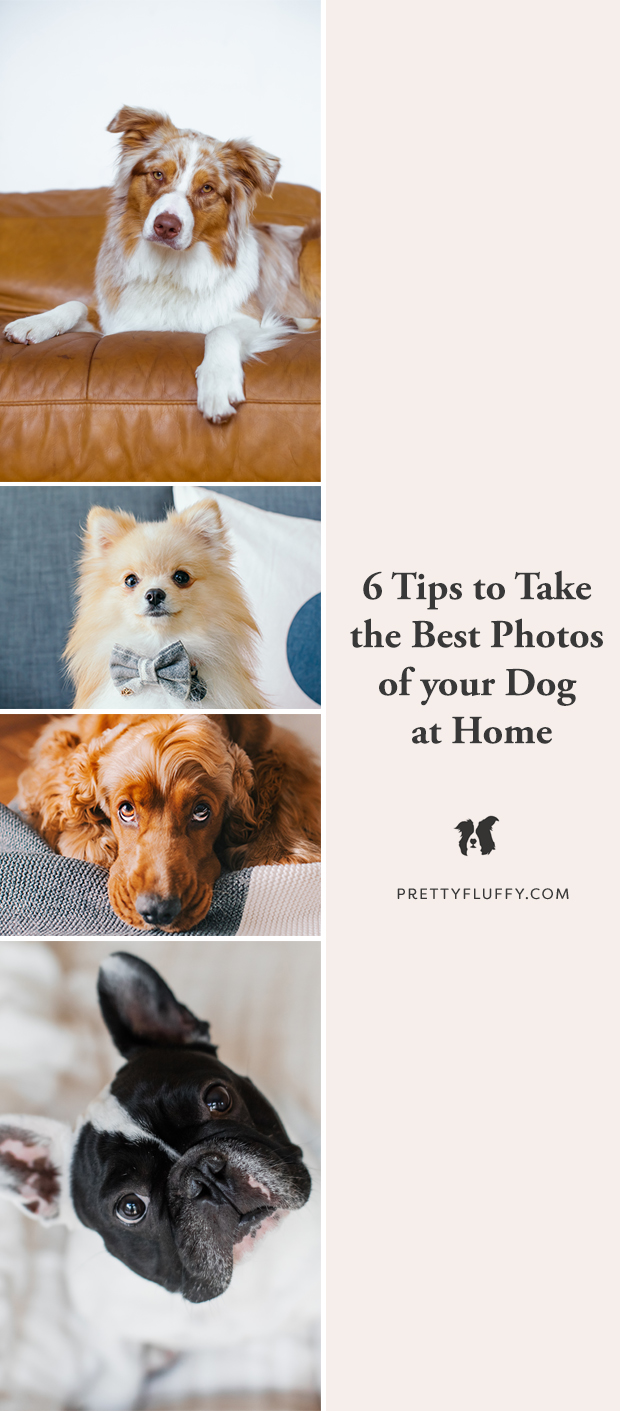 6 Tips to take the Best Photos of Your Dog