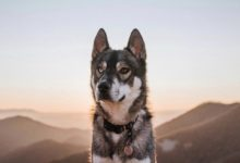 Pretty-Fluffy_18-Dog-Travel-Must-Haves-for-your-next-roadtrip