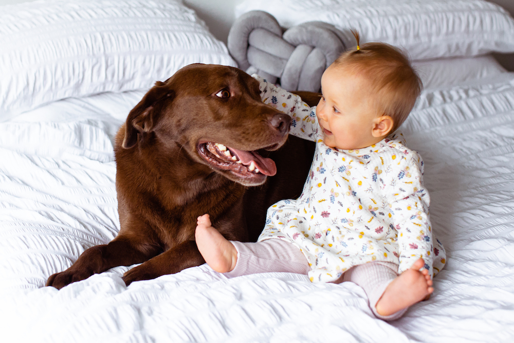 Labrador with baby - Top 5 skills to teach dogs around babies and kids