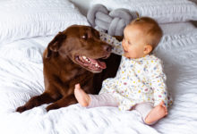National Kids and Dogs Day_Celebrate the beautiful bond between children and their dogs