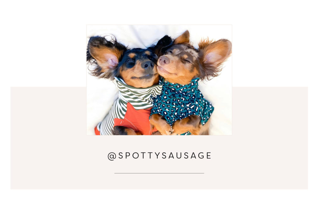 Cute dachshunds cuddling @spottysausage- Pretty Fluffy Most Obsessed Dog Mama Giveaway