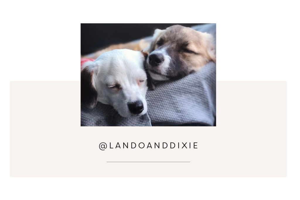 @Landoanddixie and mum - Pretty Fluffy Most Obsessed Dog Mama Giveaway