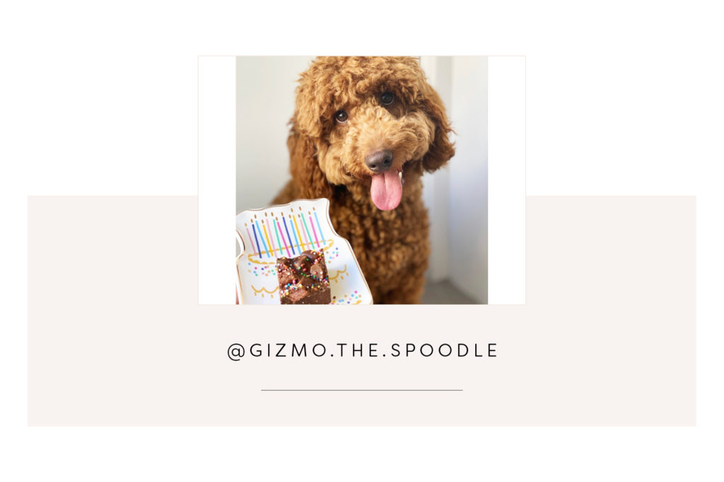 @gizmo.the.spoodle and mum - Pretty Fluffy Most Obsessed Dog Mama Giveaway