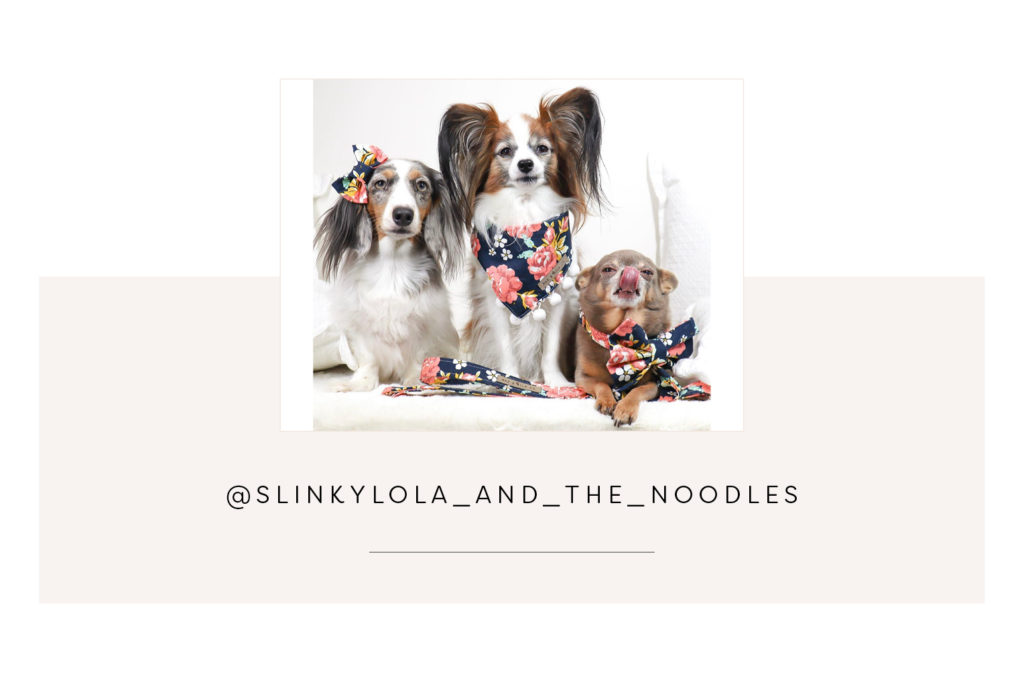Slinkylola_and_the_noodles and mum - Pretty Fluffy Most Obsessed Dog Mama Giveaway