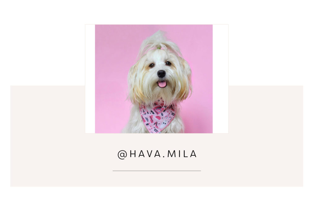 @Hava.mila and mum - Pretty Fluffy Most Obsessed Dog Mama Giveaway