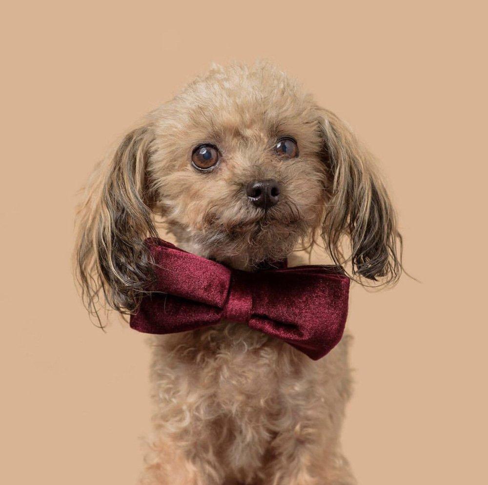 Oscar from Oscar's Law: Anti-puppy farming campaign