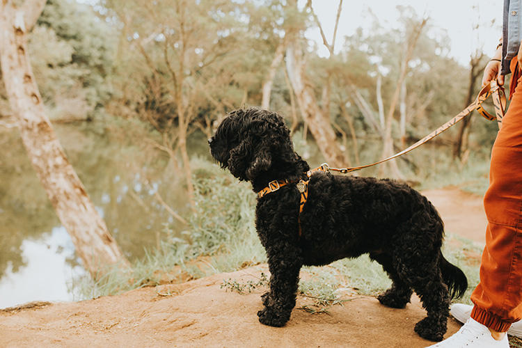 7 Simple Tips to Stop Leash Pulling