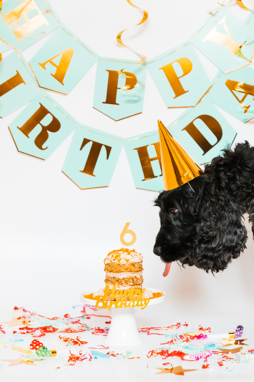 Ziggy's Cake Smash: Carrot & Apple Birthday Cake for Dogs   Pretty Fluffy