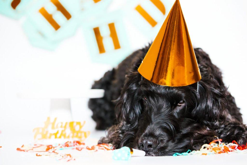 Ziggy's Cake Smash: Carrot & Apple Birthday Cake for Dogs | Pretty Fluffy